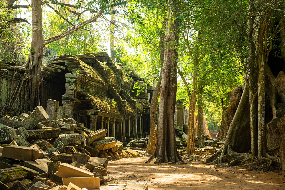 The jungle hides the ancient ruins of Ta Prohm in the Angkor National Park, Angkor, UNESCO World Heritage Site, Siem Reap, Cambodia, Indochina, Southeast, Asia, Asia