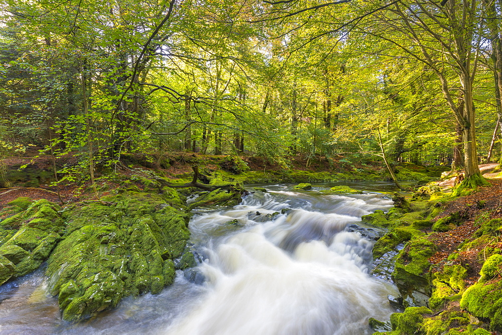 Tollymore Forest Park, Shimna River, County Down, Nothern Ireland, United Kingdom, Europe.