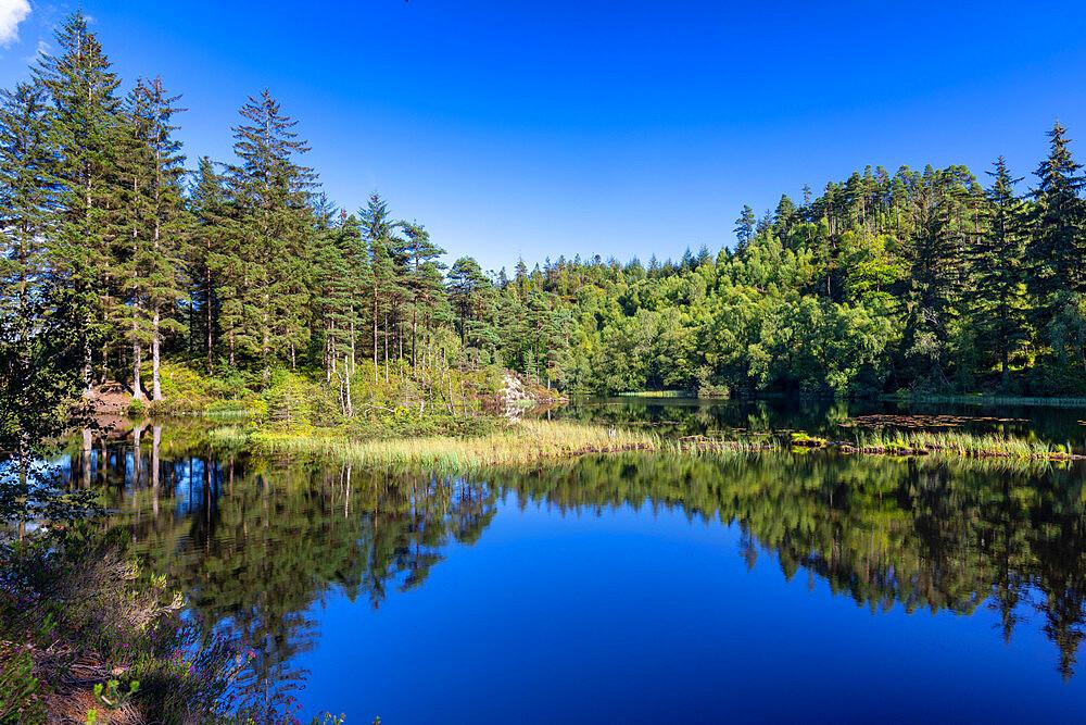 Loch Ard, Loch Lomond and Trossachs National Park, Scotland, United Kingdom, Europe - 1237-394