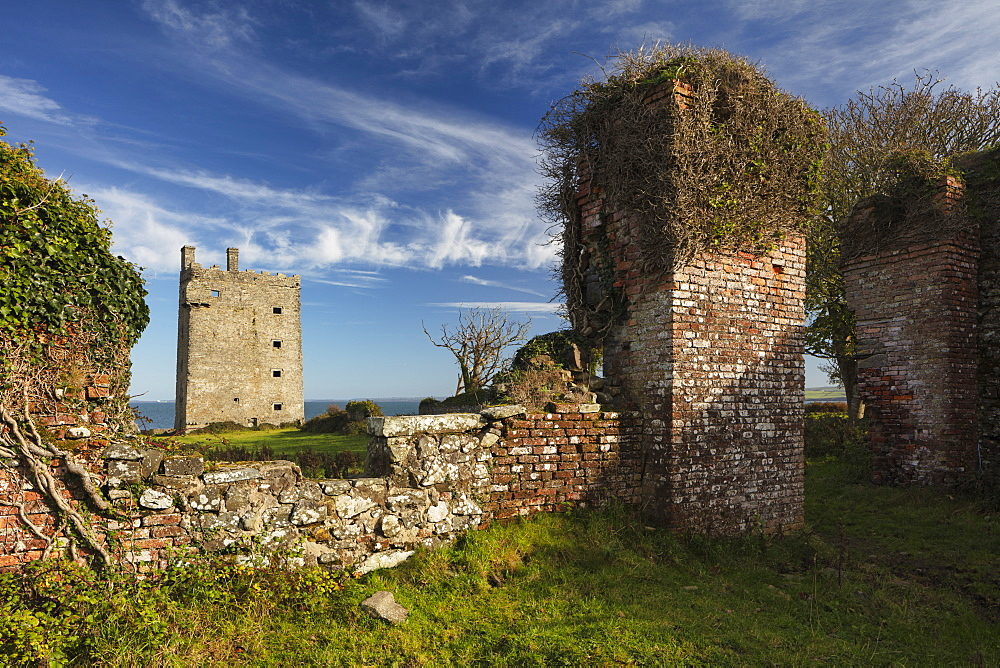 Carrigaholt Castle, County Clare, Munster, Republic of Ireland, Europe - 1240-287