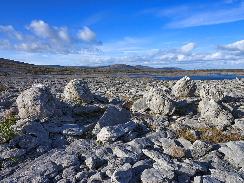 Rock Forest, The Burren,, County Clare, Munster, Republic of Ireland, Europe