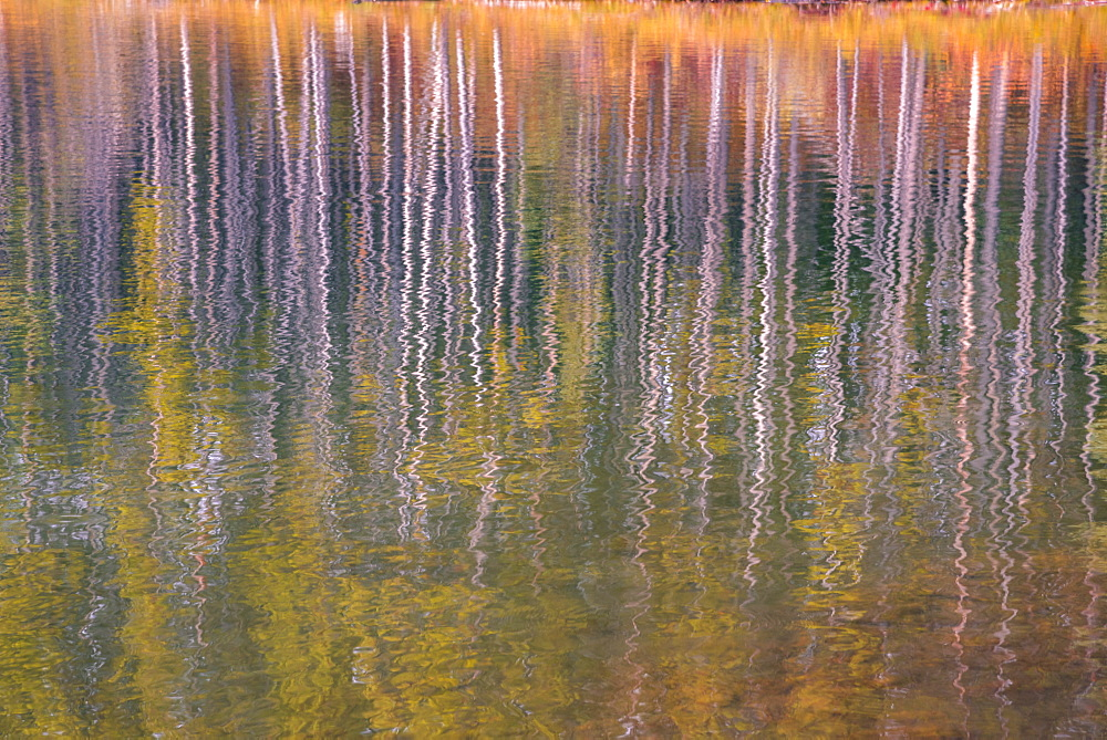Autumn aspens reflected in a lake, Banff National Park, UNESCO World Heritage Site, Alberta, Rocky Mountains, Canada, North America - 1241-201