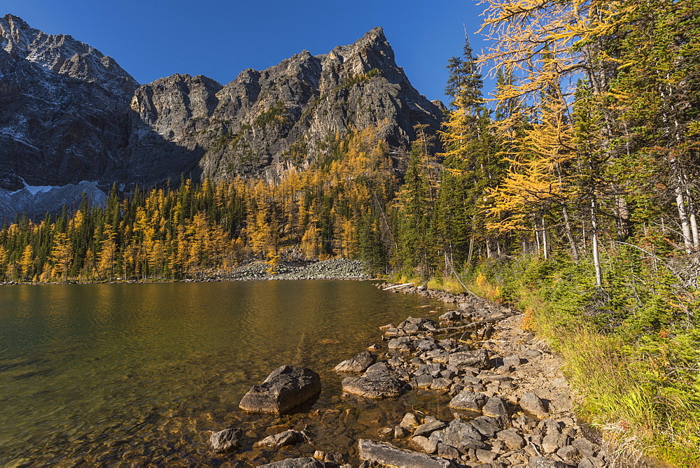 Arnica Lake in autumn with Larch trees and Mountains, Banff National Park, UNESCO World Heritage Site, Alberta, Canadian Rockies, Canada, North America - 1241-250
