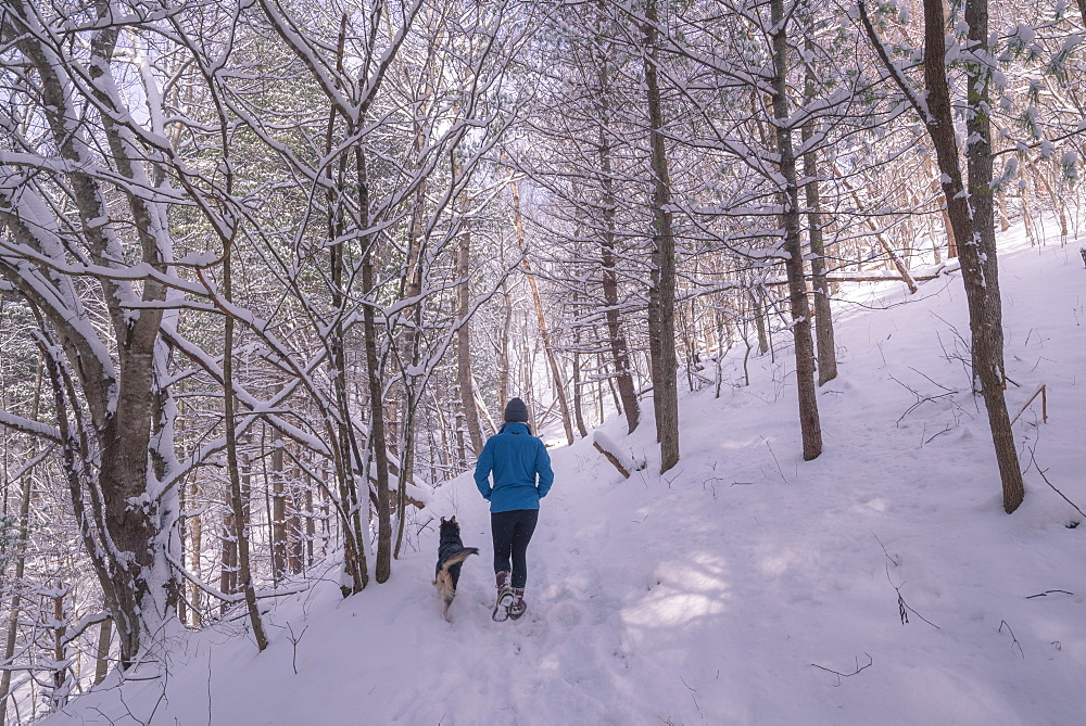 Young woman and dog walking through winter woods in the snow, winter, young woman, dog, pet, outdoors, walking, hiking, forest
