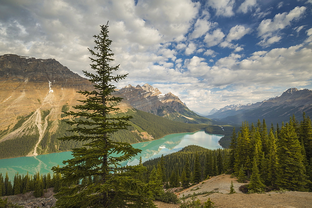 Wide view of Peyto Lake, Banff National Park, UNESCO World Heritage Site, Alberta, Rocky Mountains, Canada, North America - 1241-75