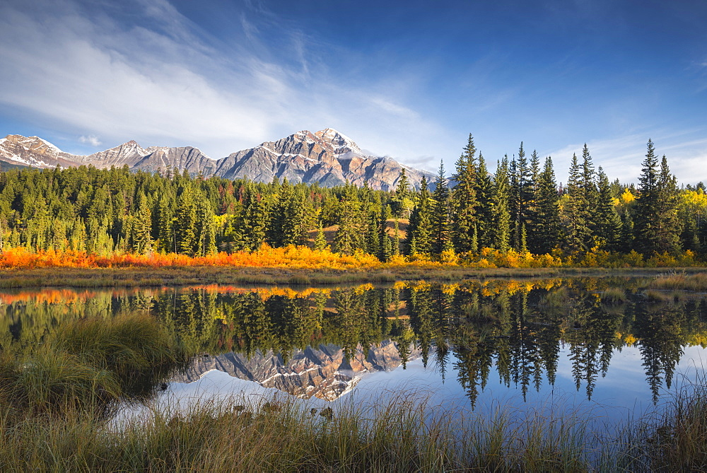 Pyramid Mountain reflected in a lake with autumn colour, Jasper National Park, UNESCO World Heritage Site, Canadian Rockies, Alberta, Canada, North America