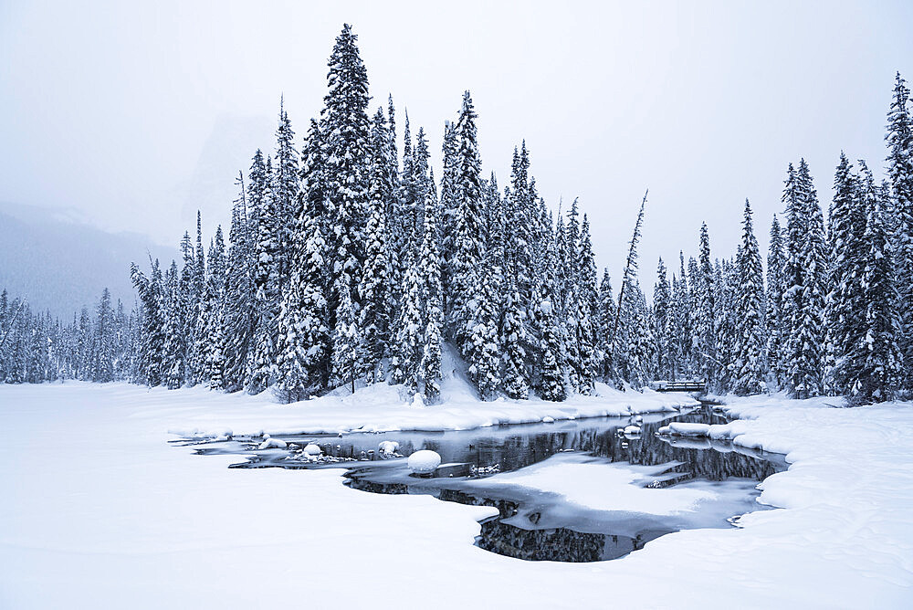 Snow-covered winter forest with frozen lake, Emerald Lake, Yoho National Park, UNESCO World Heritage Site, British Columbia, The Rockies, Canada, North America - 1241-99