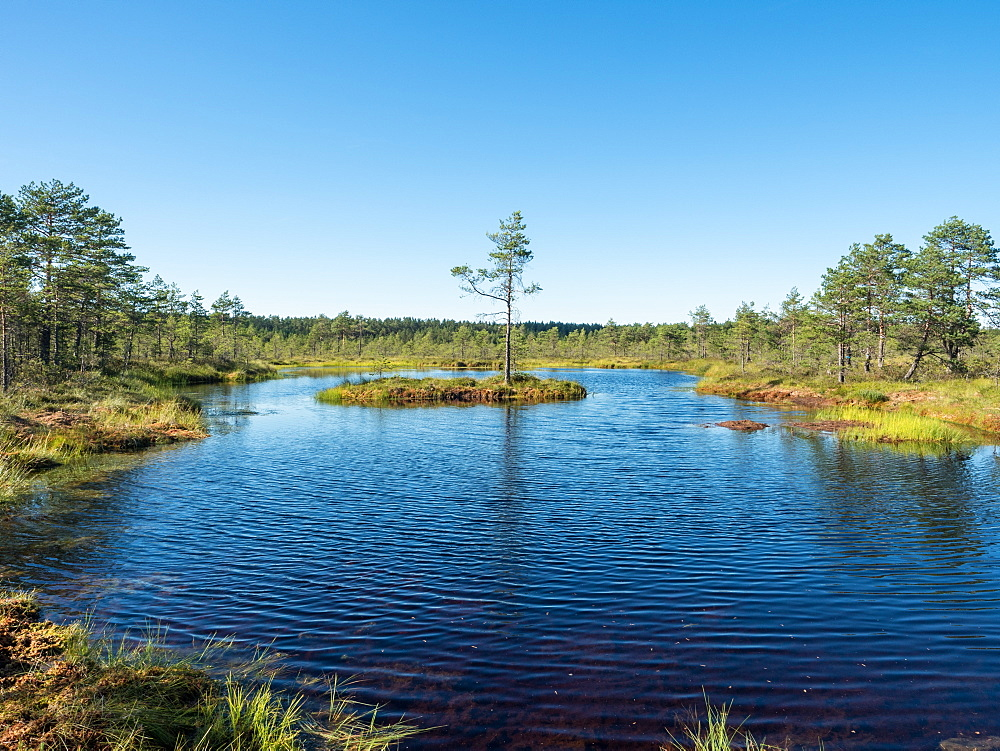 Viru bog, Lahemaa National Park, Estonia, Baltics, Europe - 1242-241