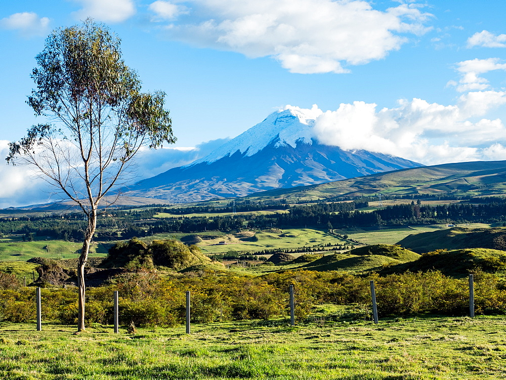 Green farmland and Cotopaxi volcano, Andes mountains, Ecuador, South America