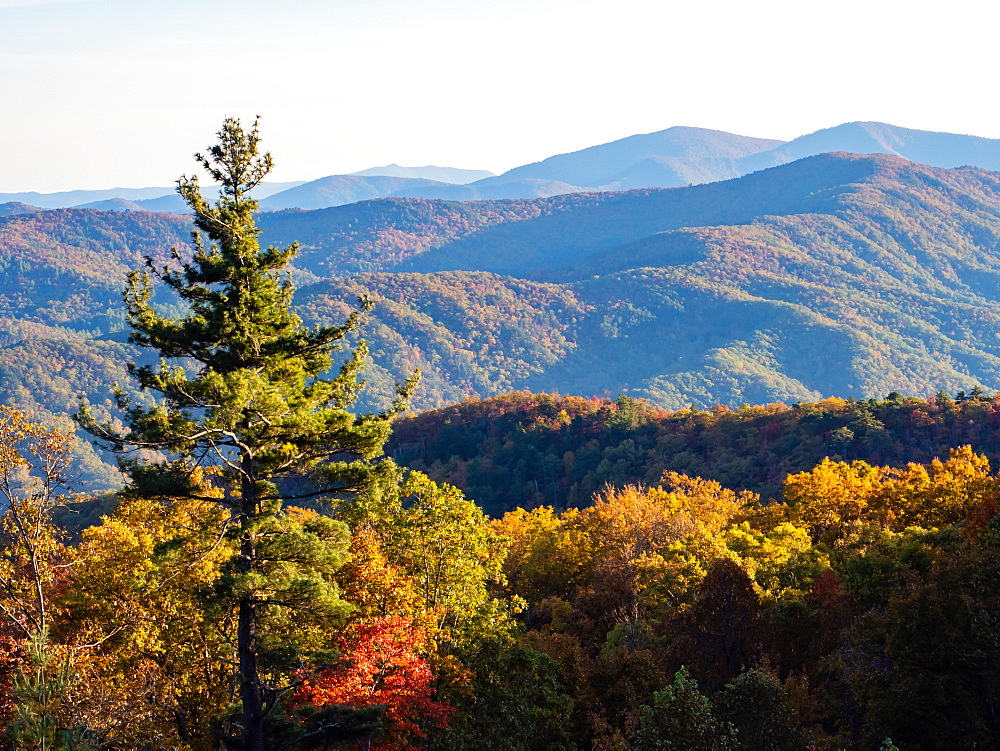 Autumn view of the mountains from the Blue Ridge Parkway, Appalachia, North Carolina, United States of America, North America