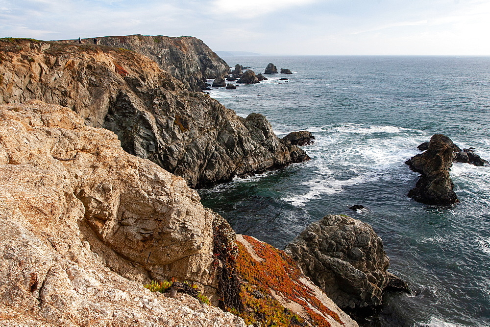 Sonoma Coast, California, United States of America, North America