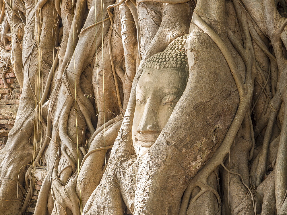 Buddha head in a tree, Ayutthaya, UNESCO World Heritage Site, Thailand, Southeast Asia, Asia