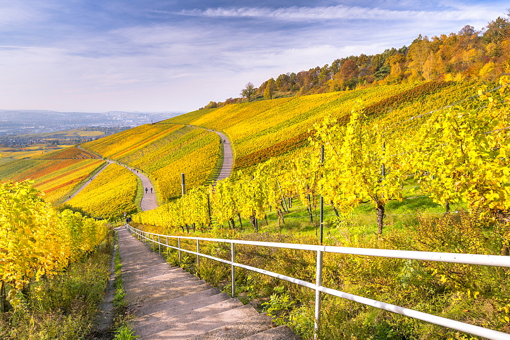 Vineyard Kappelberg, Herbst, Baden-Wurttemberg, Germany, Europe - 1244-7