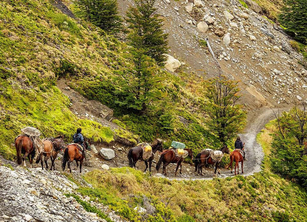 Horse transport on the trail to Refugio Chileno, Torres del Paine National Park, Patagonia, Chile, South America