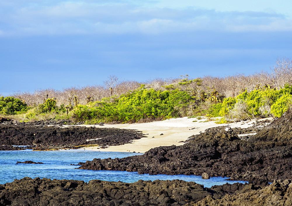 Landscape of the Dragon Hill area, Santa Cruz or Indefatigable Island, Galapagos, Ecuador - 1245-1283