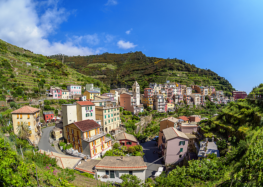 Manarola Village, elevated view, Cinque Terre, UNESCO World Heritage Site, Liguria, Italy, Europe