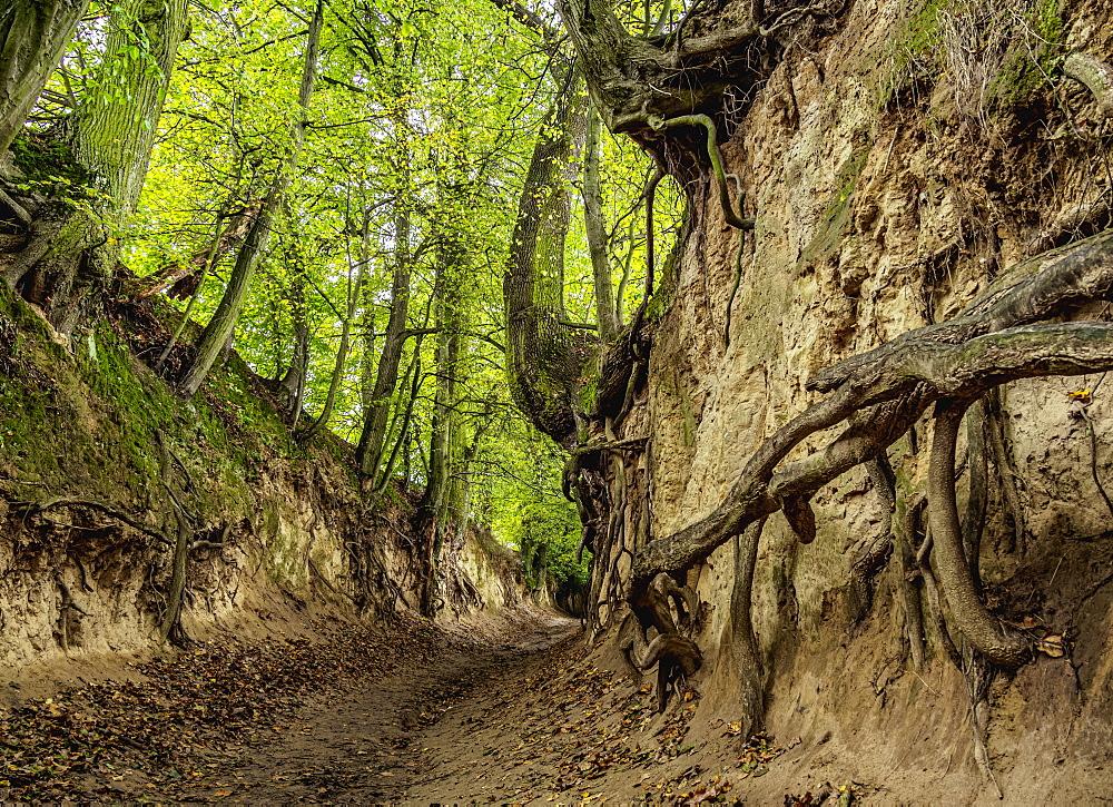 Gorge Korzeniowy Dol, Kazimierz Dolny, Lublin Voivodeship, Poland, Europe