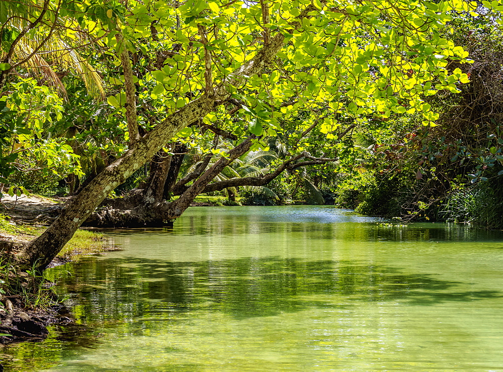 Frenchman's Cove River, Portland Parish, Jamaica, West Indies, Caribbean, Central America