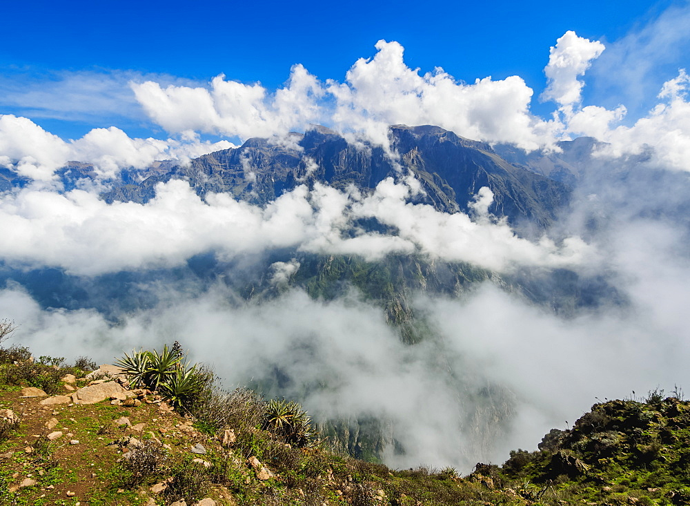 Colca Canyon, Cruz del Condor, Arequipa Region, Peru, South America