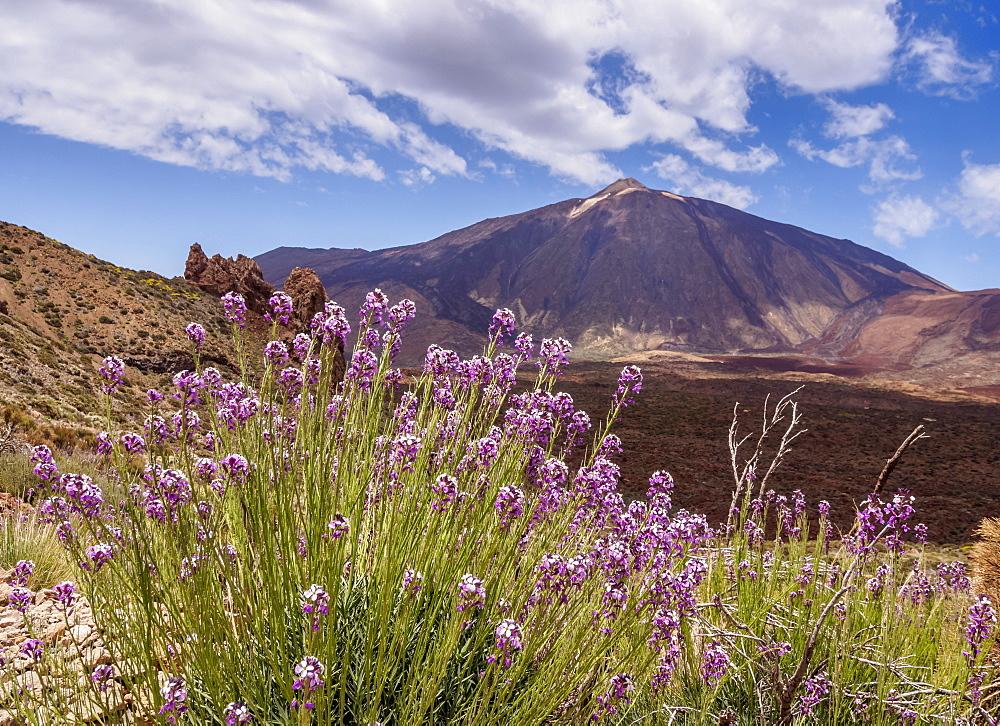 Teide Mountain, Teide National Park, UNESCO World Heritage Site, Tenerife Island, Canary Islands, Spain, Europe