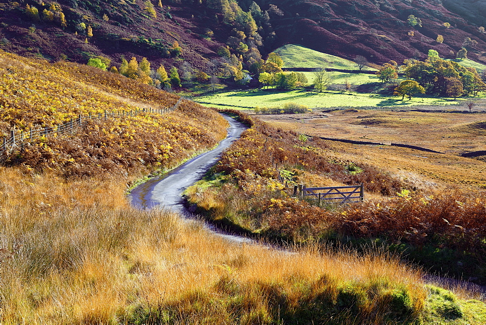 An autumn view of a gate and winding road through the fern covered hills and fells of Langdale Valley in the Lake District