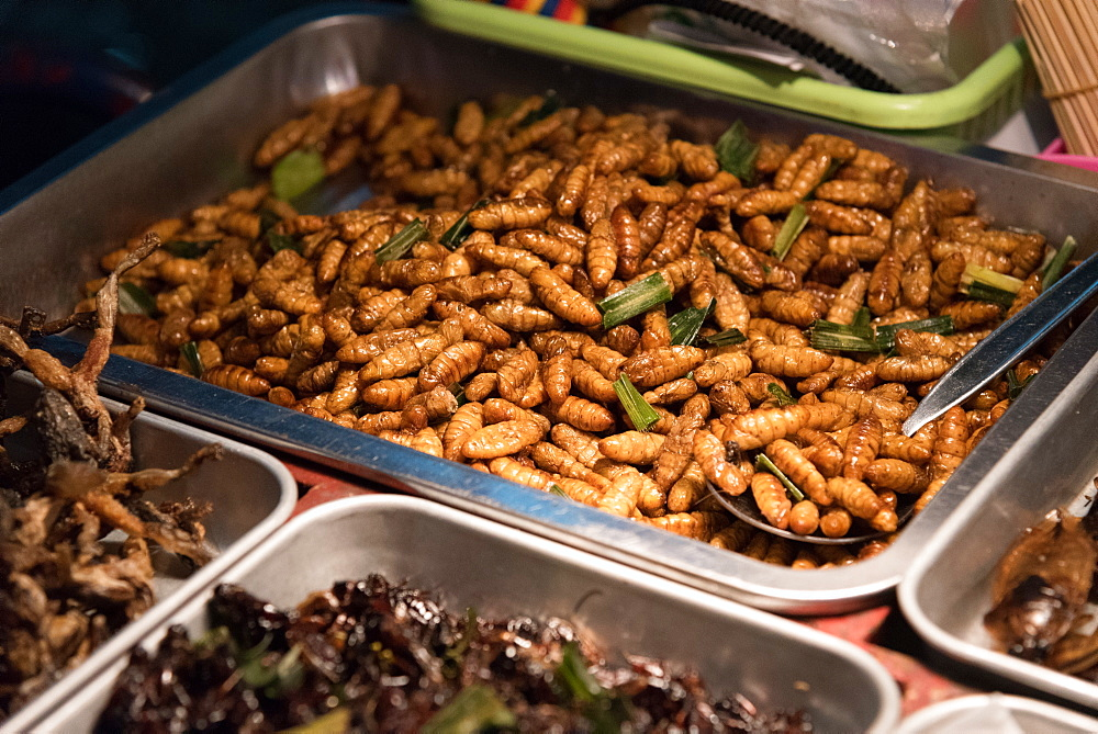 Street food of maggots and crickets, Bangkok, Thailand, Southeast Asia, Asia