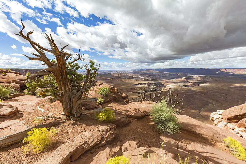 Desert landscape, Canyonlands National Park, Moab, Utah, United States of America, North America
