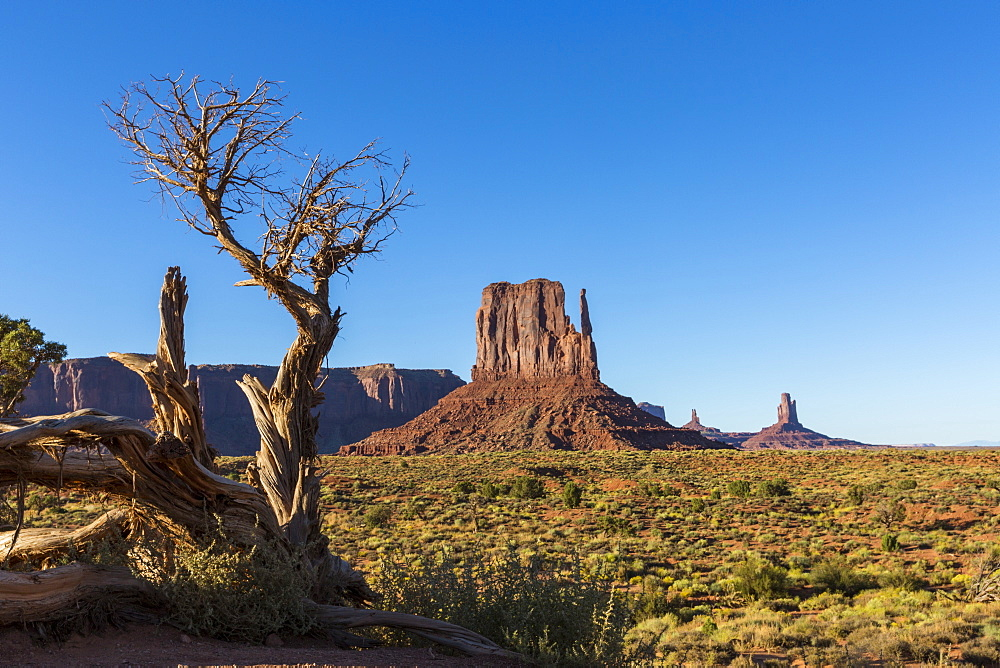 Rock formations and tree, Monument Valley, Navajo Tribal Park, Arizona, United States of America, North America