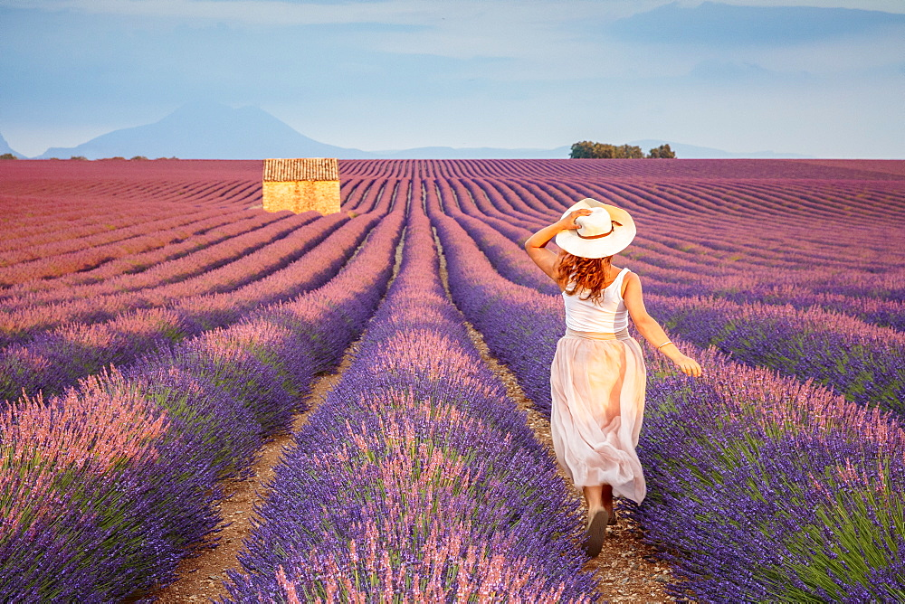 Woman with hat running in lavender fields. Plateau de Valensole, Alpes-de-Haute-Provence, Provence-Alpes-Cote d'Azur, France.