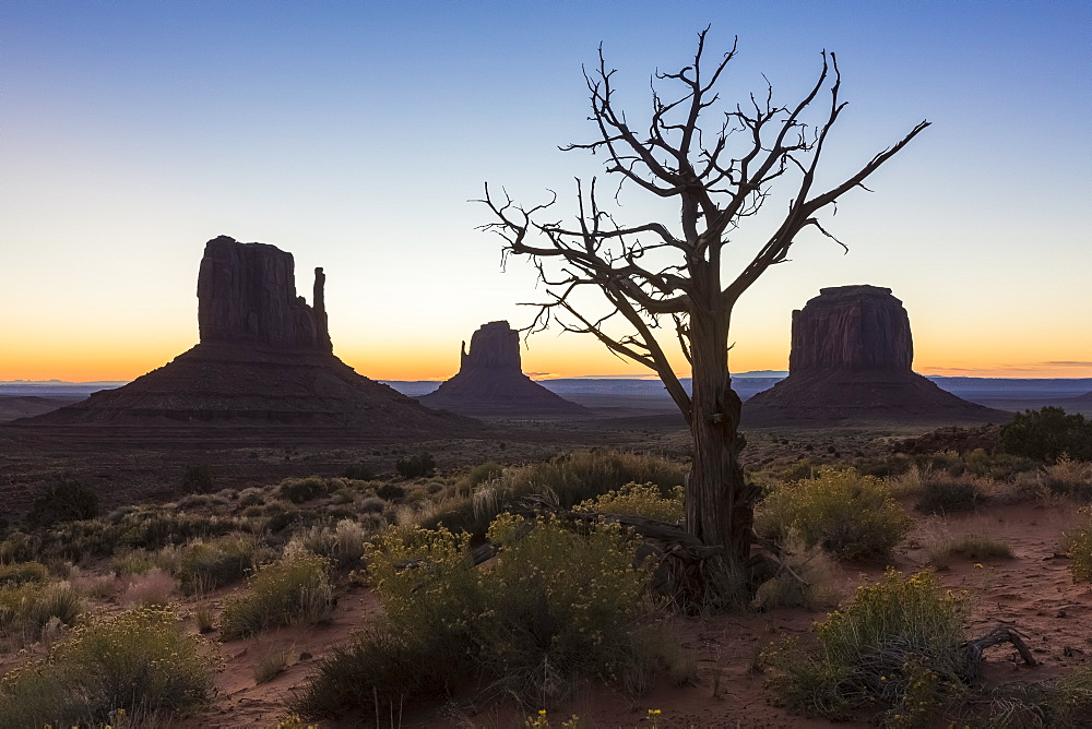 Tree and bushes before sunrise. Monument Valley, Navajo Tribal Park, Arizona, United States of America, North America