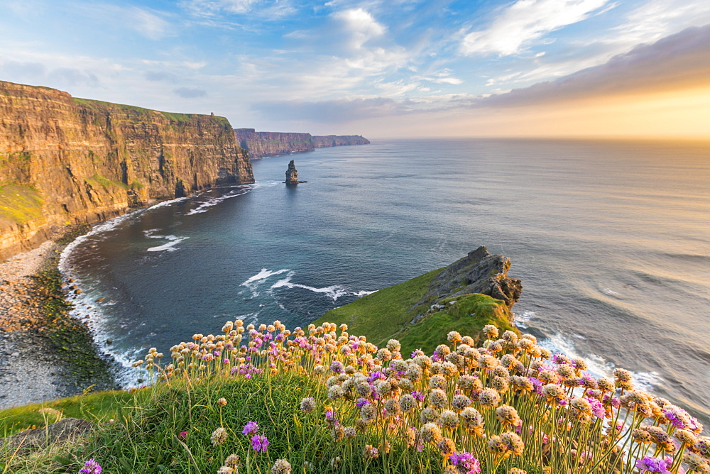 Cliffs of Moher at sunset, with flowers on the foreground. Liscannor, Co. Clare, Munster province, Ireland.