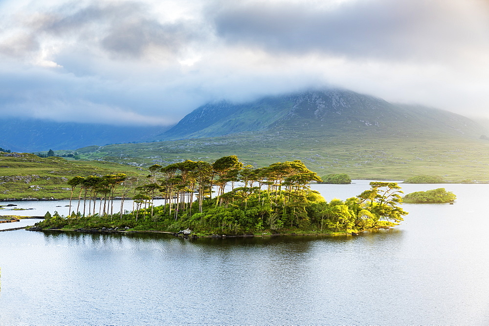 Pine Island on Derryclare Lake, Connemara, County Galway, Connacht province, Republic of Ireland, Europe