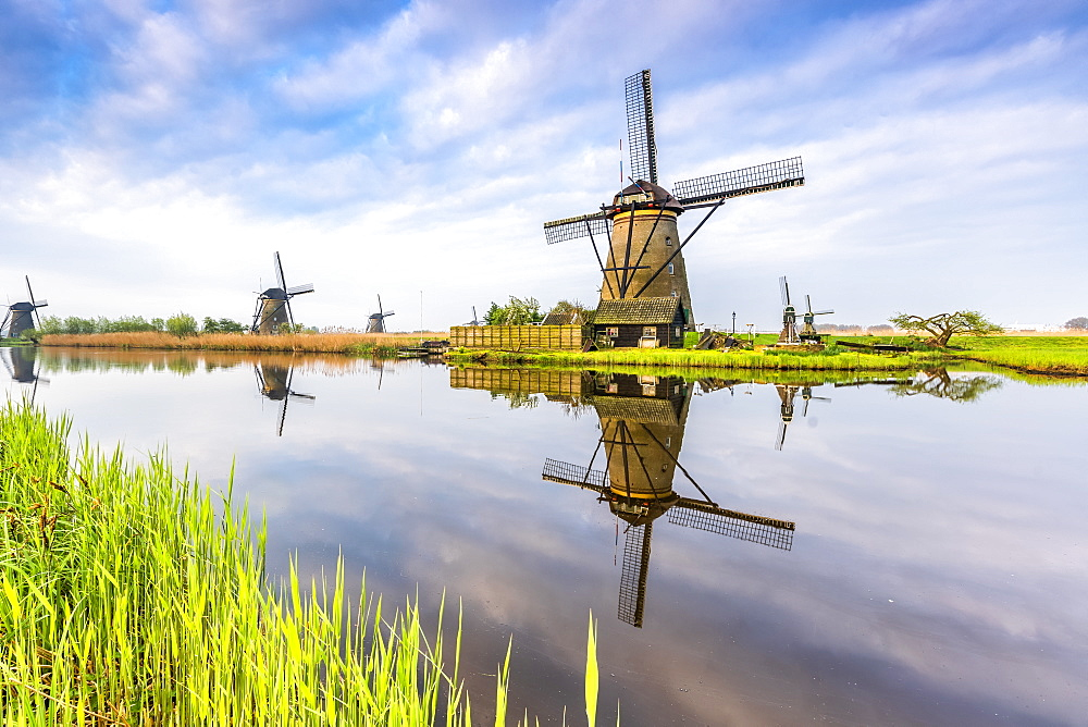 Windmills reflection on the canal and grass in the foreground, Kinderdijk, UNESCO World Heritage Site, Molenwaard municipality, South Holland province, Netherlands, Europe