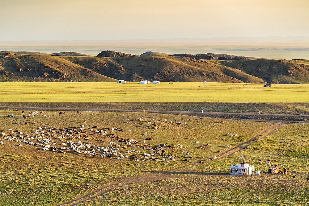 Nomadic camp and livestock, Bayandalai district, South Gobi province, Mongolia, Central Asia, Asia