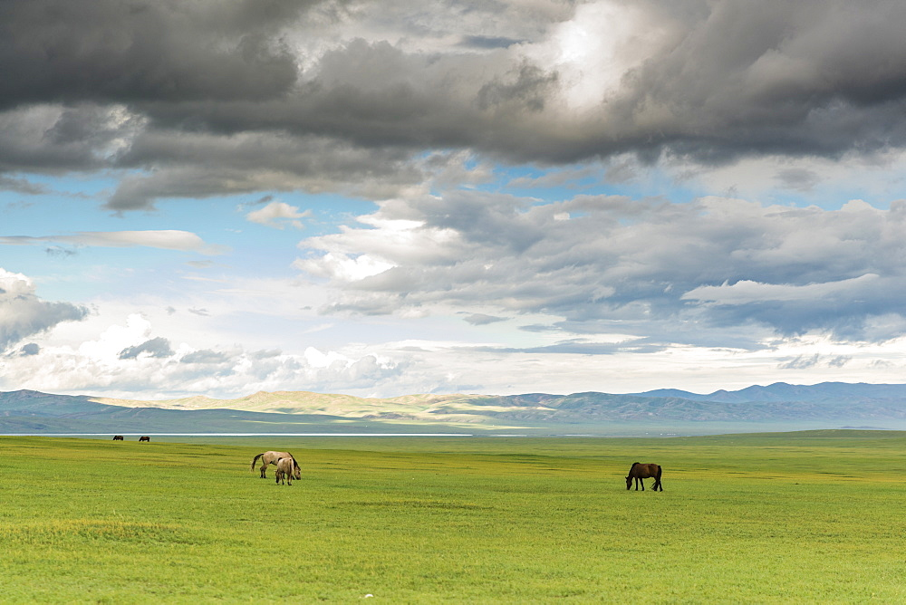 Horses grazing on the Mongolian steppe under a cloudy sky, South Hangay, Mongolia, Central Asia, Asia