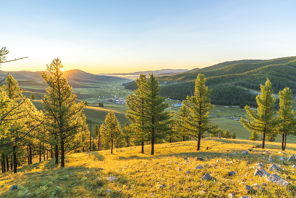 Fir trees in the morning light above Tsenkher Hot Springs. North Hangay province, Mongolia. - 1251-348