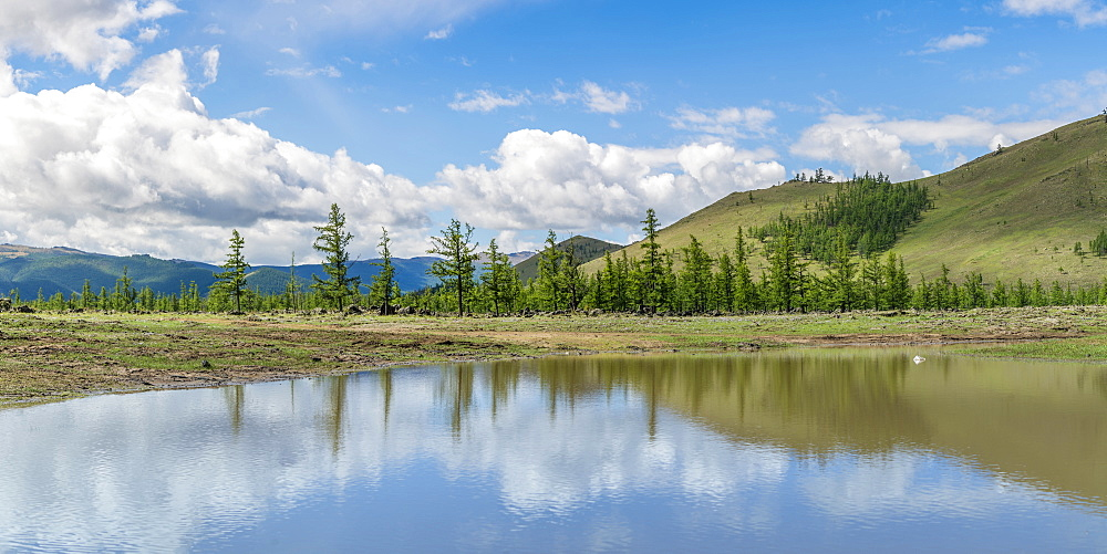 Water pond and fir trees in White Lake National Park. Tariat district, North Hangay province, Mongolia.