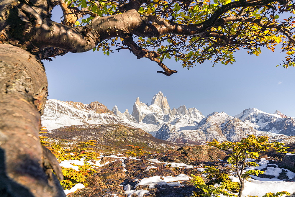 Fitz Roy range peaks with tree in autumnal landscape, El Chalten, Los Glaciares National Park, UNESCO World Heritage Site, Santa Cruz province, Argentina, South America - 1251-528