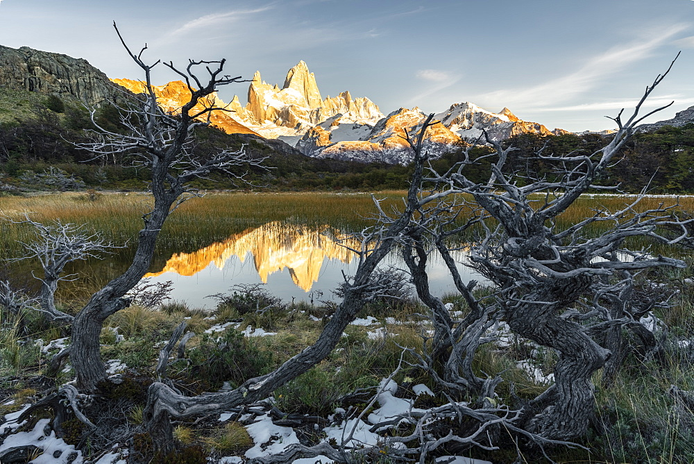 Fitz Roy reflection at dawn from Mirador Fitz Roy, with trees in the foreground, El Chalten,, Los Glaciares National Park, UNESCO World Heritage Site, Santa Cruz province, Argentina, South America