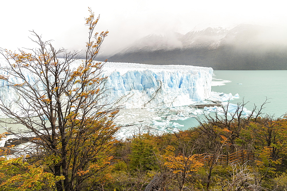 Perito Moreno with trees, Lago Argentino and mountains in autumn, Los Glaciares National Park, UNESCO World Heritage Site, Santa Cruz Province, Argentina, South America - 1251-536