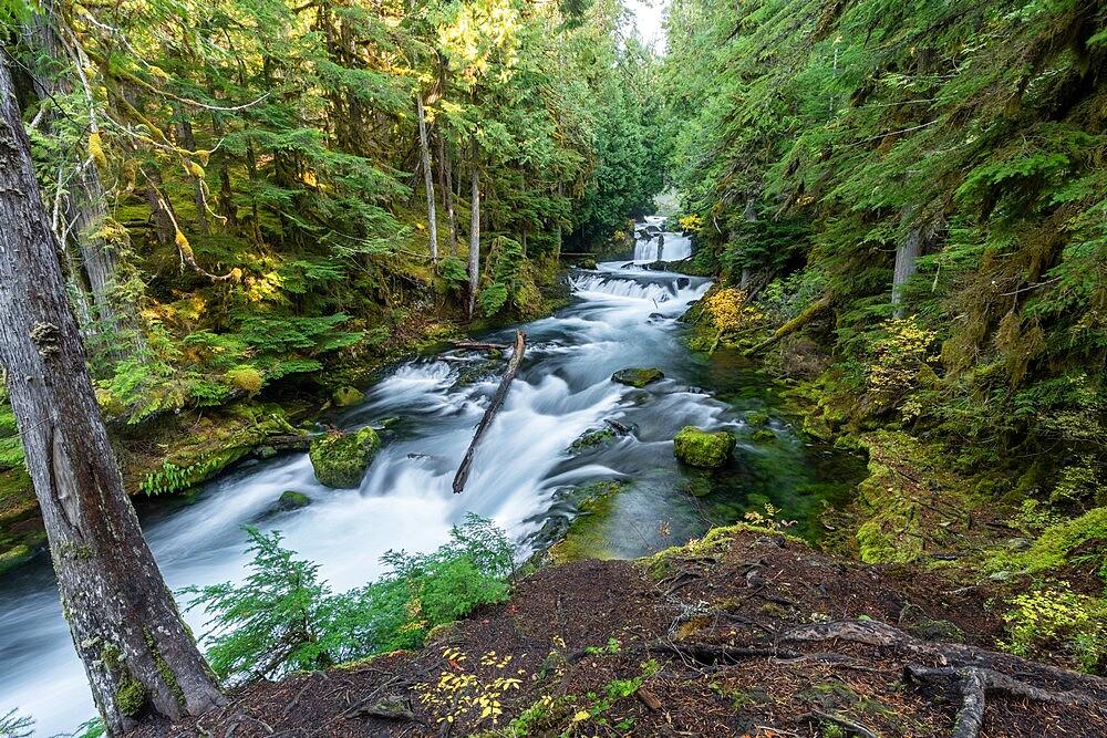 Sahalie Falls in autumn, McKenzie Bridge, Lane county, Oregon, United States of America, North America - 1251-547