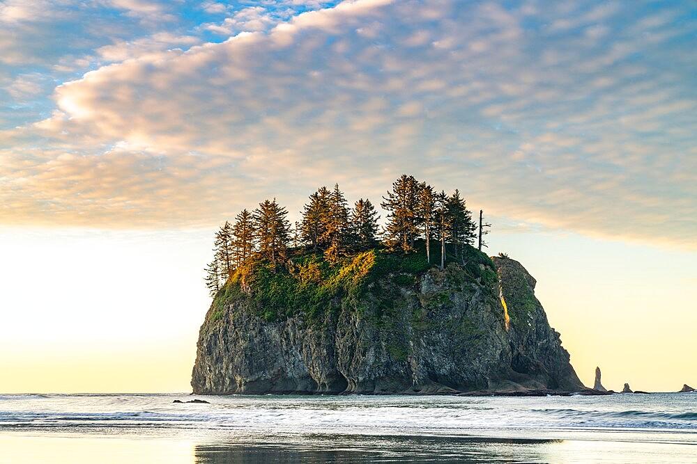 Sea stack at dawn at Second Beach, La Push, Clallam county, Washington State, United States of America, North America - 1251-565