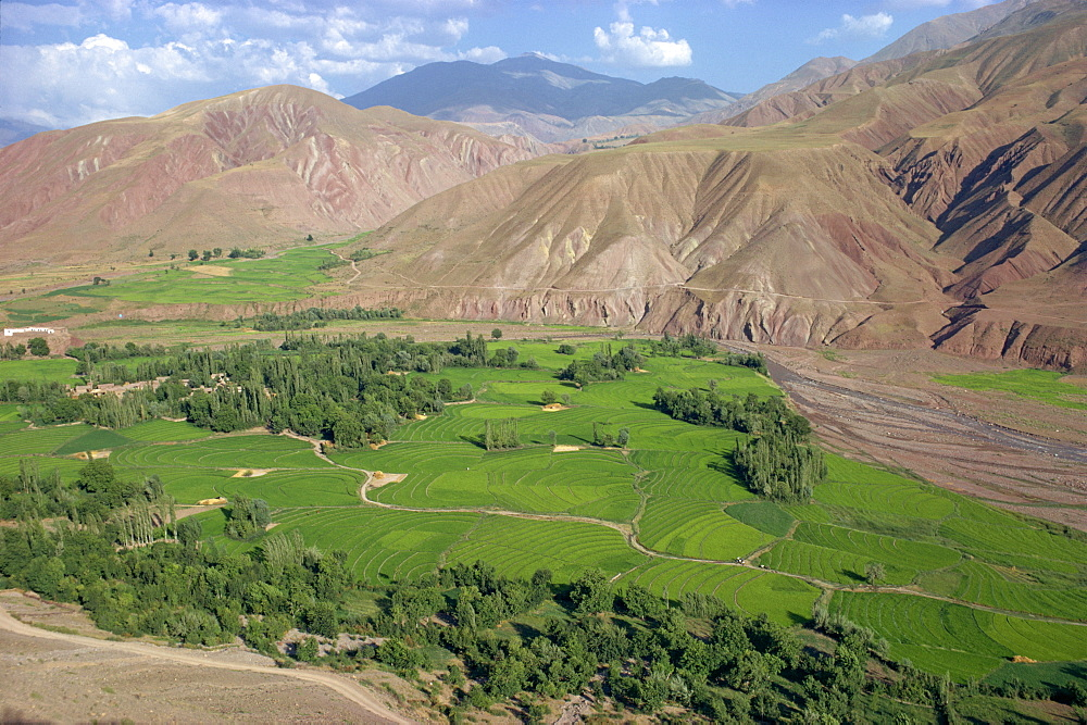 Rice fields and terracing in a valley in the Shahrak region, Iran, Middle East