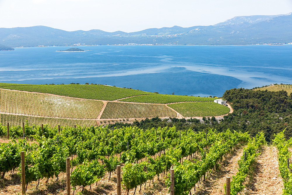 Coastal winery on the hills of the Dalmatian Coast, Croatia.