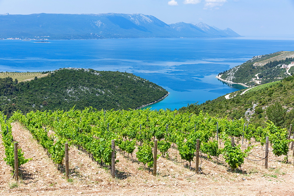Coastal winery on the hills of the Dalmatian Coast, Croatia, Europe - 1263-107
