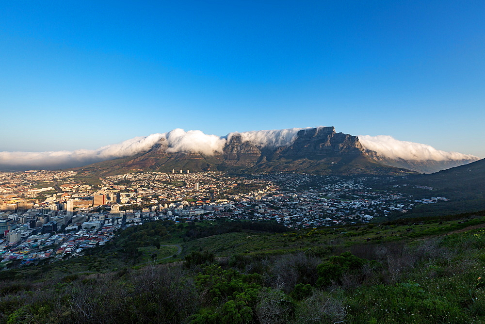Table Mountain covered in a tablecloth of orographic clouds, Cape Town, South Africa, Africa