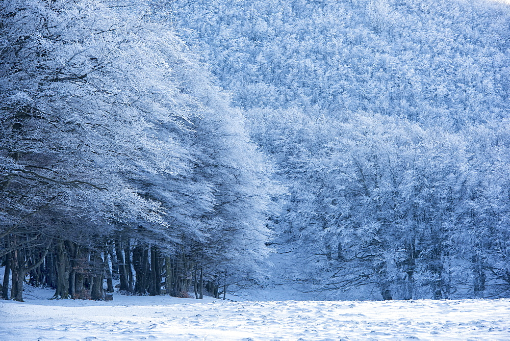 Forest with snow in winter, Monte Cucco Park, Apennines, Umbria, Italy, Europe - 1264-167