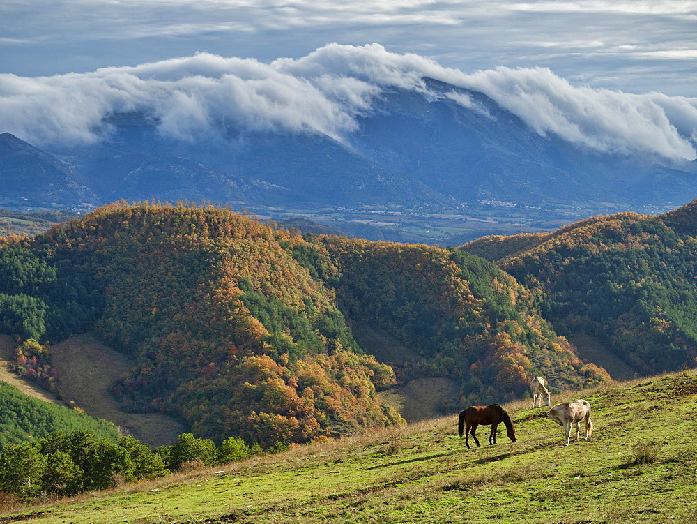 Horses grazing by Apennine Mountains in Italy, Europe - 1264-226