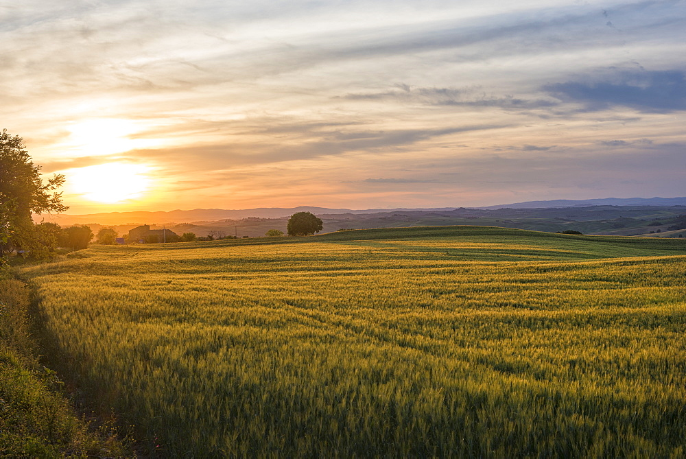 Meadows at sunset, Val d'Orcia (Orcia Valley), UNESCO World Heritage Site, Tuscany, Italy, Europe