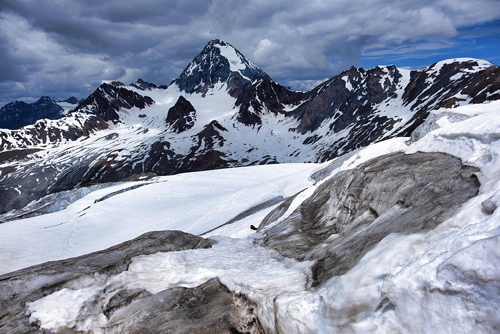 Mount Gran Zebru in early summer, Valfurva, Lombardy, Italy, Europe - 1264-45